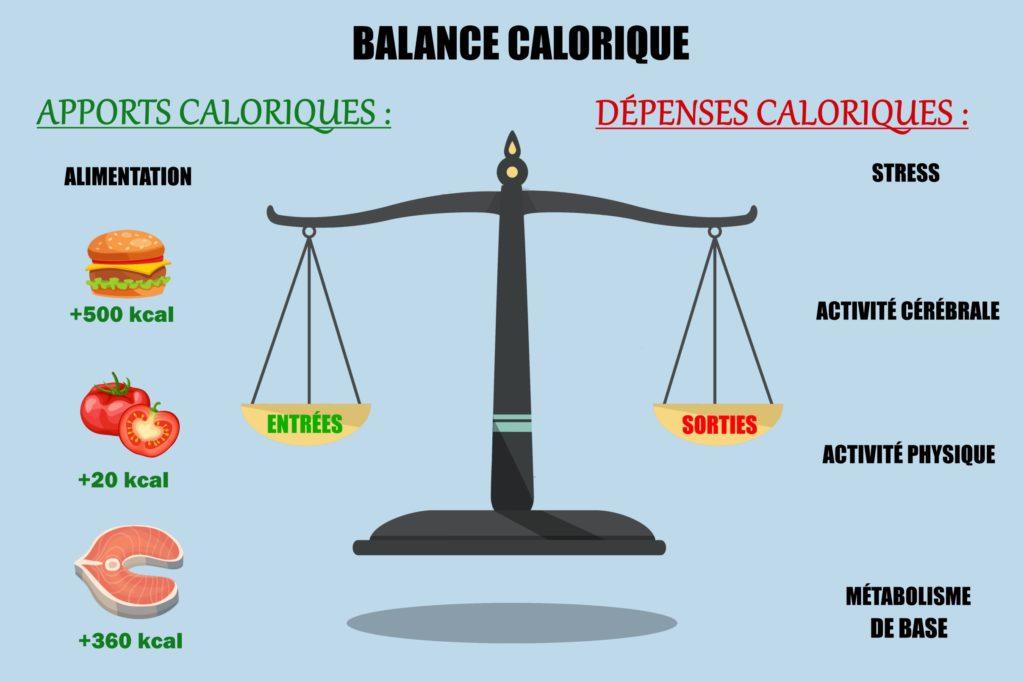 balance calorique avec les apports et les dépenses caloriques